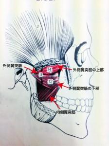 顎関節症説明写真